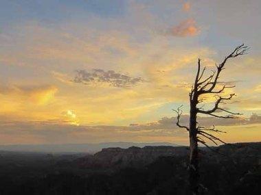 Dead Tree at Sunset