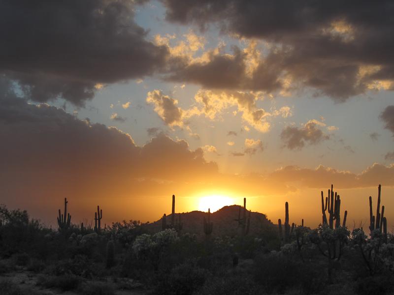 Sunset with Saguaros
