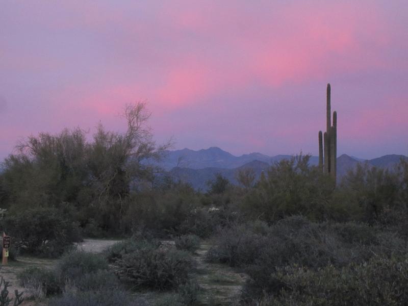 Sunset with Saguaro 3