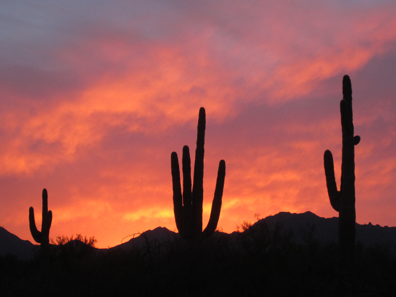 Sunset with Saguaro 2