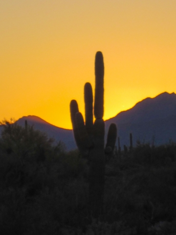Sunset with Saguaro