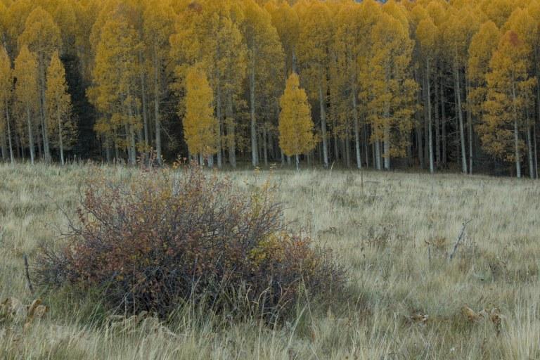 bush1.jpg