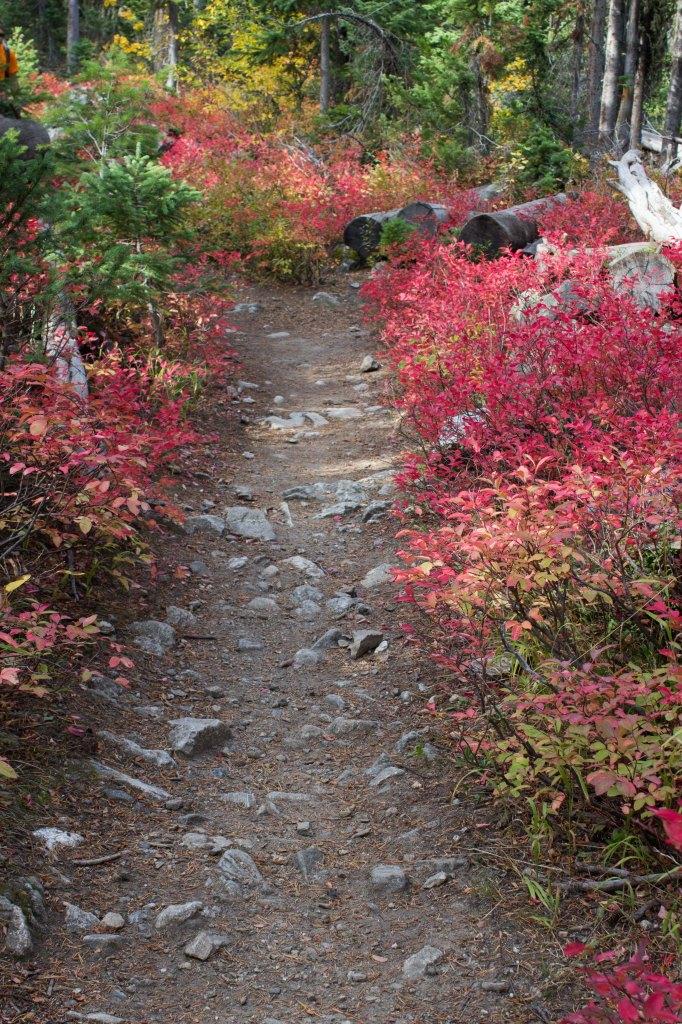 foliageredpath