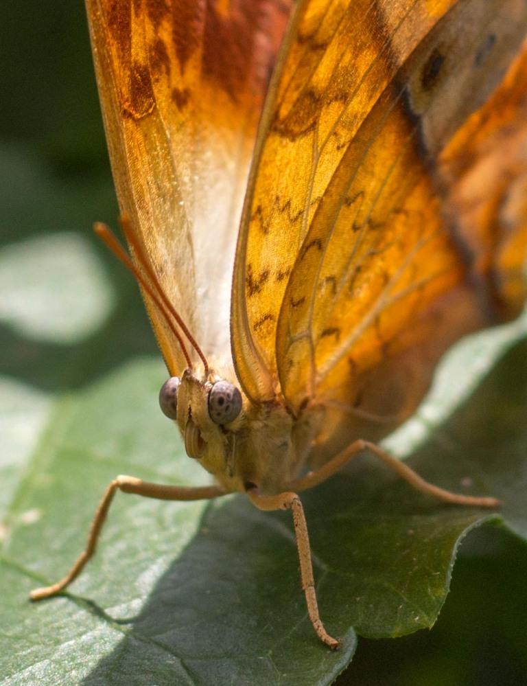 browncloseup