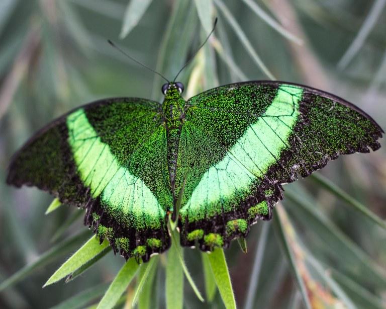greenshimmer