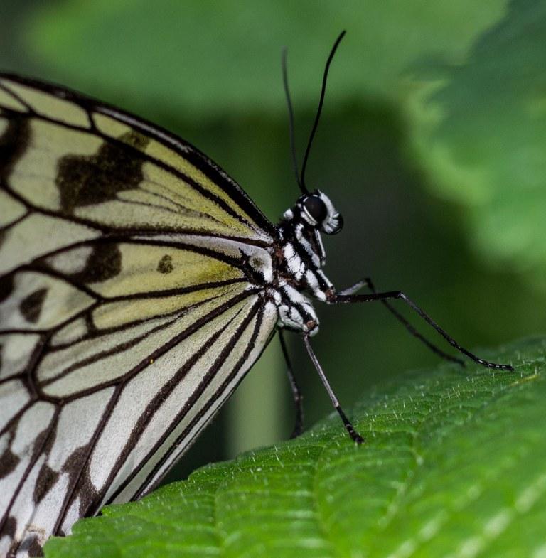 monarchside