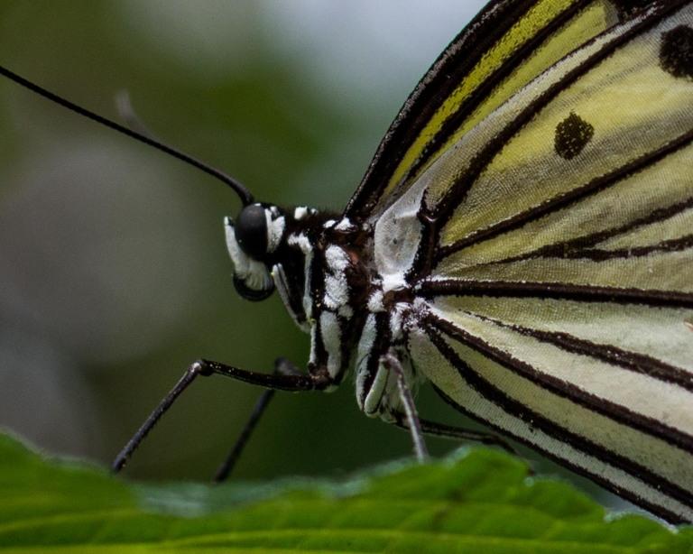monarchside2