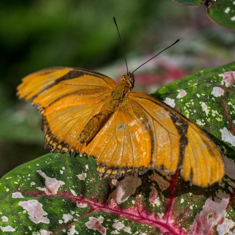 orangeonpink